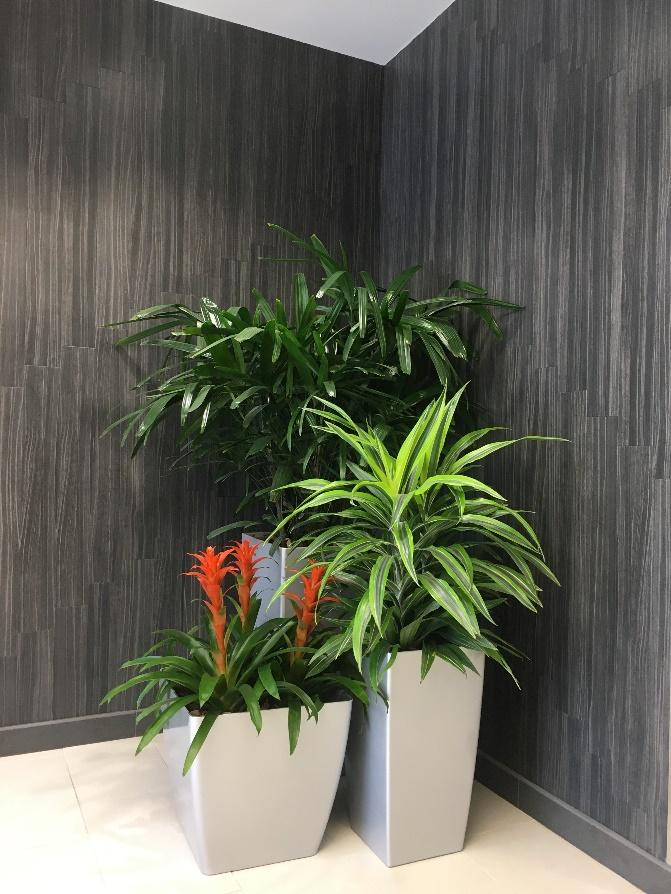 plants in hall